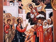 Sermon on the Gospel of the Sunday of Zacchaeus