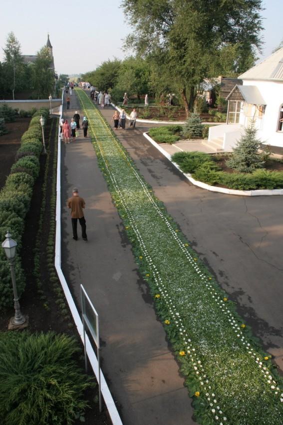 Зеленая дорожка для дорогого гостя