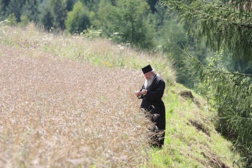 Μοναστηριακές φυτείες σιτηρών